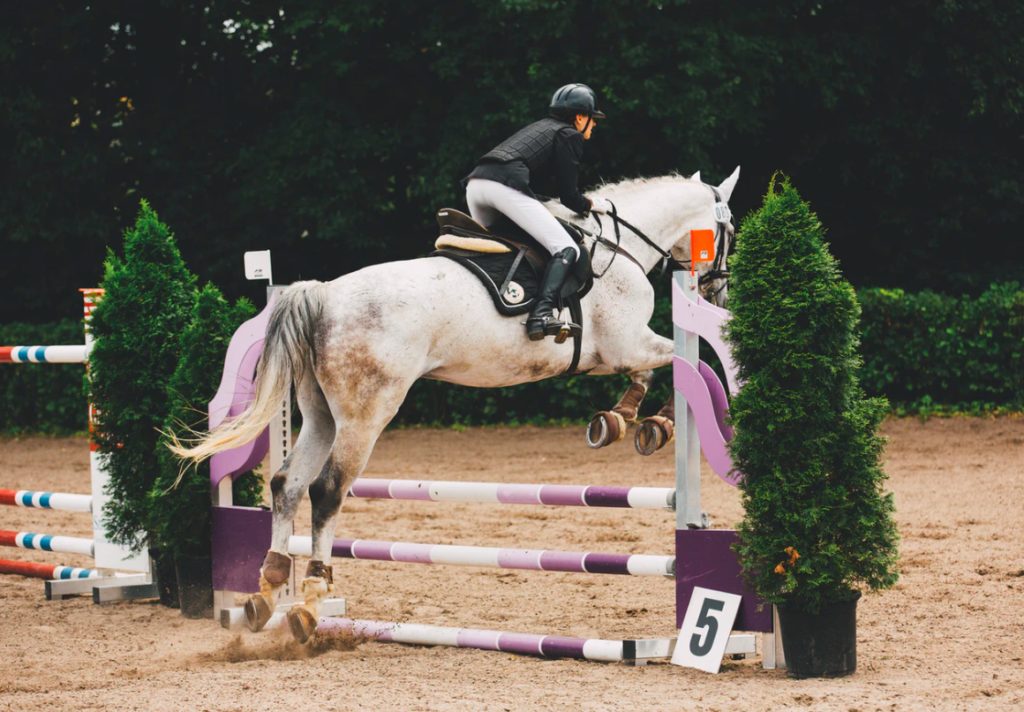 best horse jump cups
