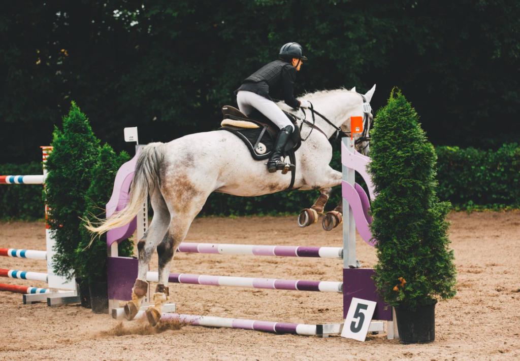 best horse jump cups